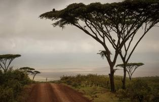 Afrika Tansania Ngorongoro The Highlands Highlands-Ngorongoro-landscape-Eliza-De